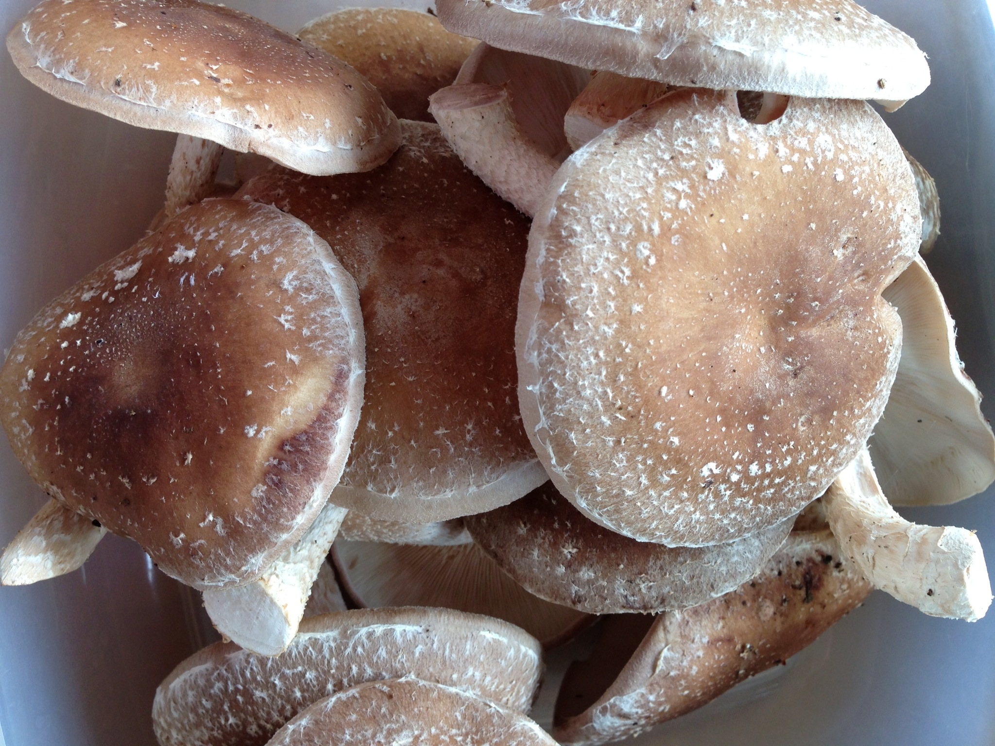 How can the mushrooms be preserved