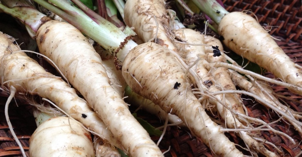 Raw Unwashed Parsnips