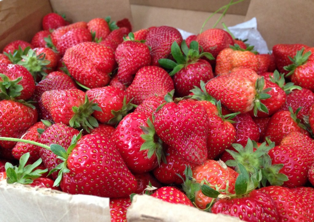 Whitted-Bowers Farm Strawberries