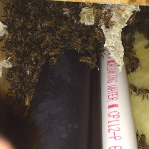 Straggling Bees in the structure
