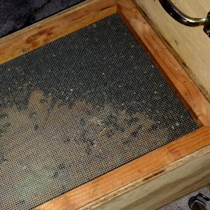 Bees in the Contraption Cage