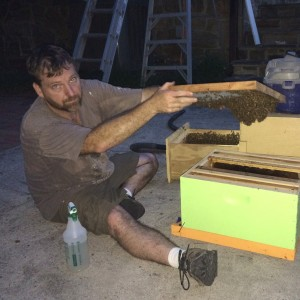 Moving the hive to new box