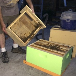 Moving the last of the hive